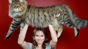 The Biggest Cats of all time - They all look like Tiger Cubs