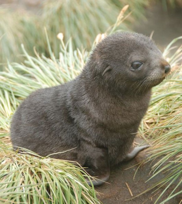 The Cutest Baby Animals in The World (45 Photos) The Cutest Baby Animal In The World