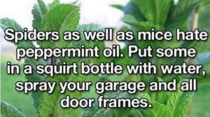 Some life hacks to Start the Weekend (24 Photos)