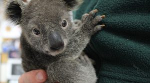 Here are some of most cutest animals from Australia that aren't dangerous