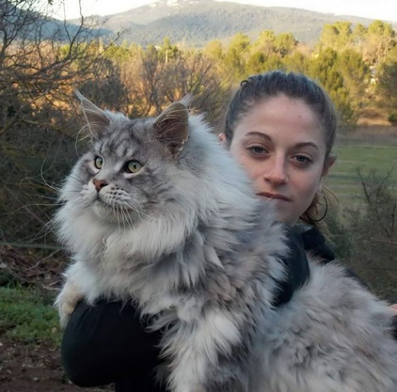 maine-coon-cats 7