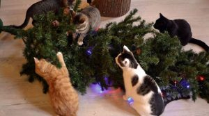 15 Funny Photos of Cat's Celebration on Christmas Trees