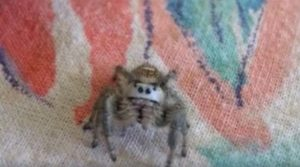 Spiders which is Not Creepy and Terrifying (21 Photos)