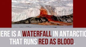 Some facts you Probably never Knew about Antarctica  (31 Photos)