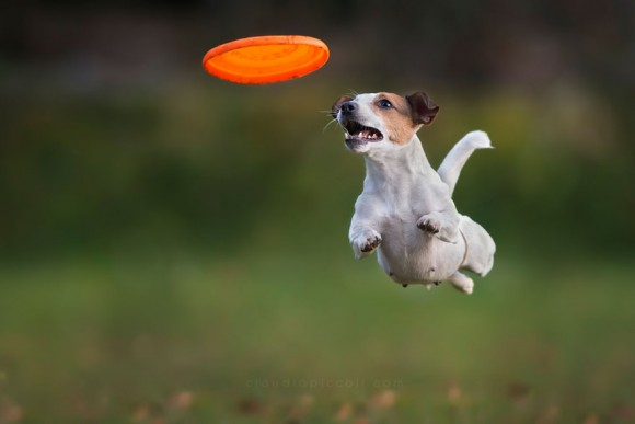 dogs-can-fly 10