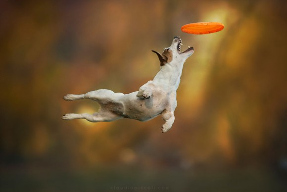 dogs-can-fly 2
