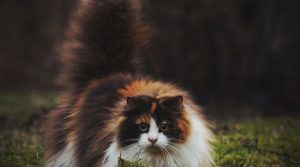 The World's  most Fluffiest Cats (20 Photos)