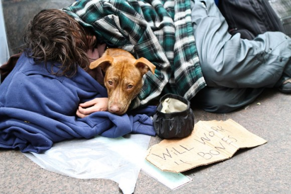 homeless-dogs-12