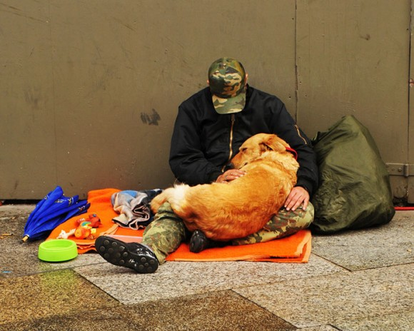homeless-dogs-15
