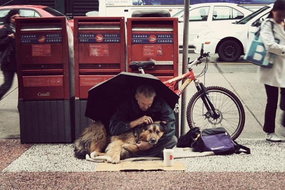 homeless-dogs-4
