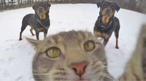 The Perfect Selfies Taken Ever By Anyone (8 Photos)