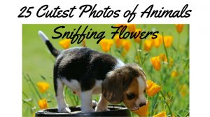 25 Cutest Photos of Animals Sniffing Flowers
