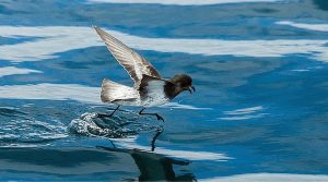 These Freaking Animals Can Walk on Water (Totally Awesome)