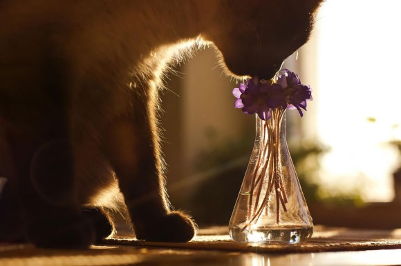 animals-smelling-flowers-12