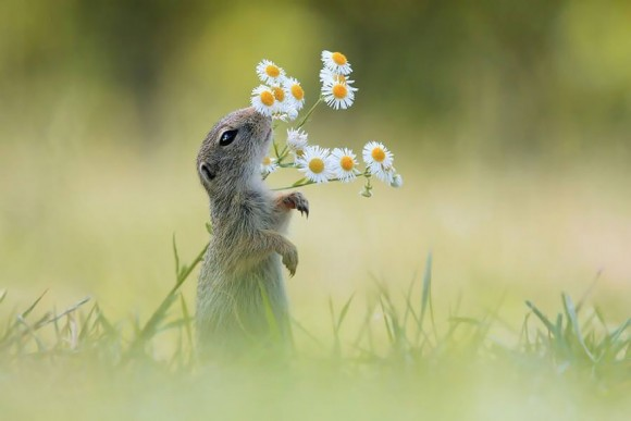 animals-smelling-flowers-18