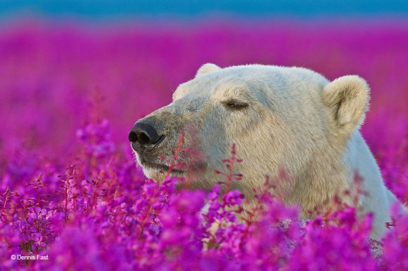 animals-smelling-flowers-19