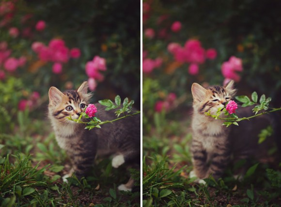 animals-smelling-flowers-2