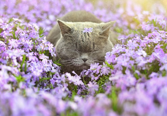 animals-smelling-flowers-21