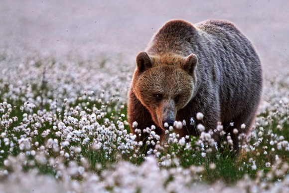 animals-smelling-flowers-22