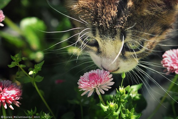 animals-smelling-flowers-23