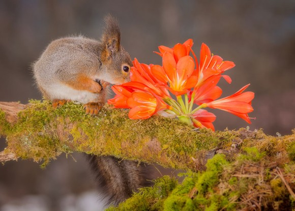 animals-smelling-flowers-24