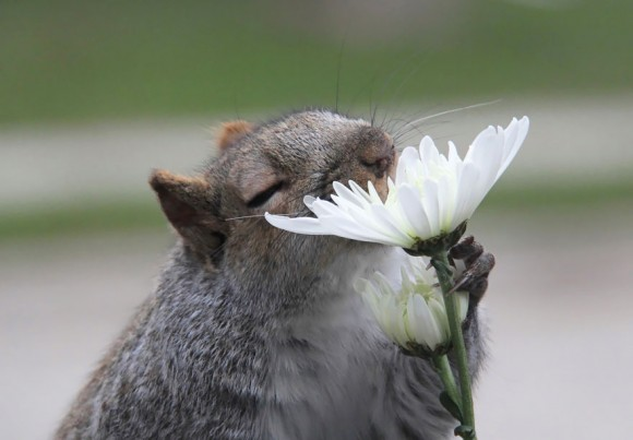 animals-smelling-flowers-4