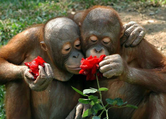animals-smelling-flowers-7