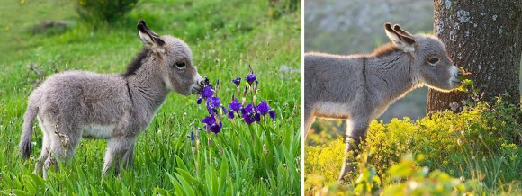 animals-smelling-flowers-8