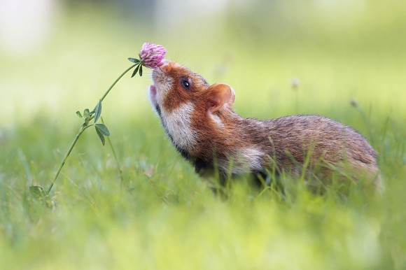 animals-smelling-flowers-9