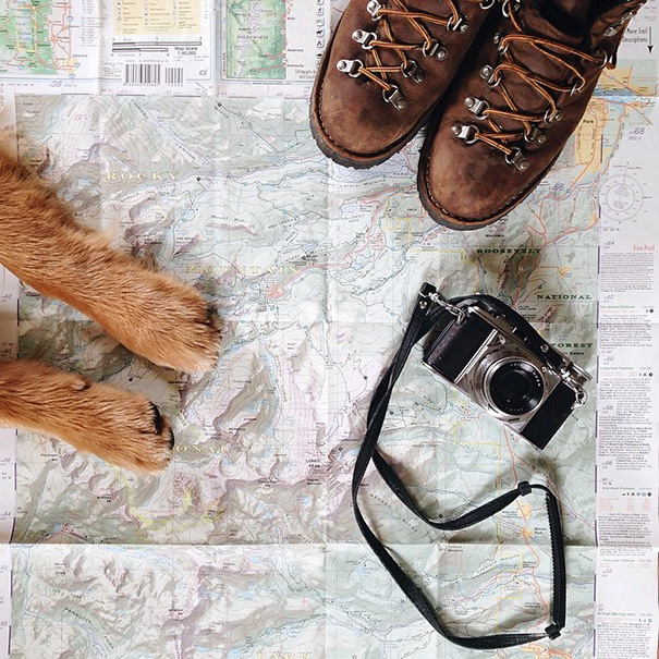 traveling-dog-aspen-the-mountain-pup-instagram-1_1453188316