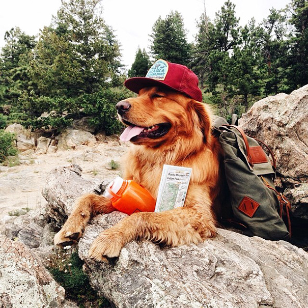 traveling-dog-aspen-the-mountain-pup-instagram-2_1453188316