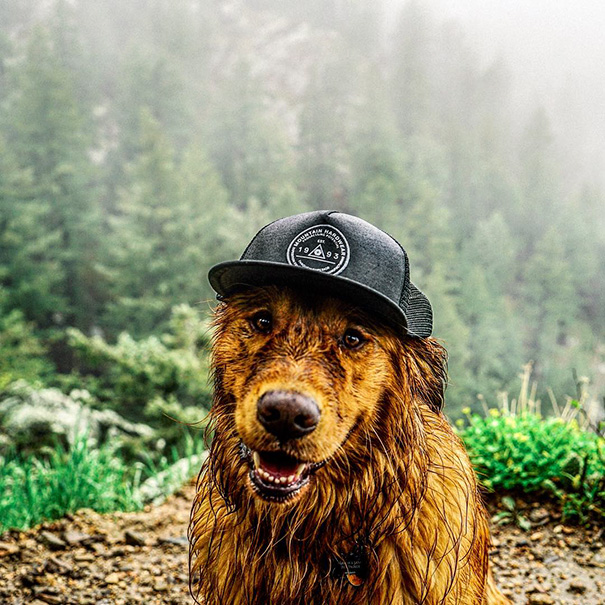 traveling-dog-aspen-the-mountain-pup-instagram-53_1453188316