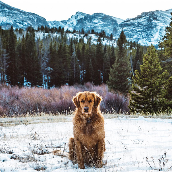 traveling-dog-aspen-the-mountain-pup-instagram-58_1453188316