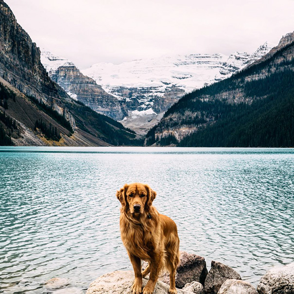 traveling-dog-aspen-the-mountain-pup-instagram-66_1453188316
