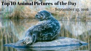 Top 10 Animal Pictures of the Day - September 27, 2016
