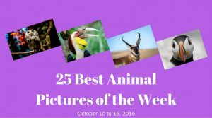25 Best Animal Pictures of the Week - October 10 to 16, 2016