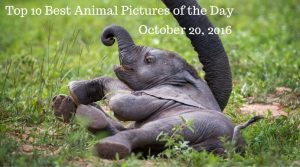 Top 10 Best Animal Pictures of the Day - October 20, 2016