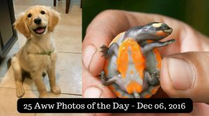 25 Aww Photos of the Day - Dec 06, 2016