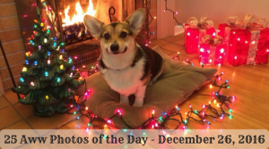 25 Aww Photos of the Day - December 26, 2016