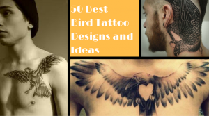 50 Best Bird Tattoo Designs and Ideas